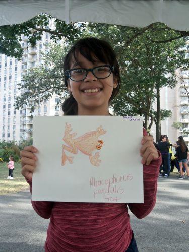 beautiful harlequin frog drawing at WPLive