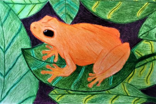 Caroline Tew, 15 years old, Frogs are orange, Jersey City, NJ, USA