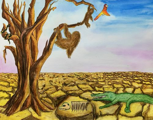 1st Place, Taffy Chen, 11 yrs old, USA, Vicious circle of drought in forest