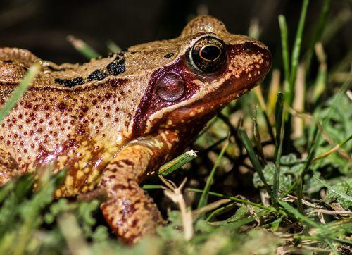 3-red-frog-by-russ-barrow-2015-winner