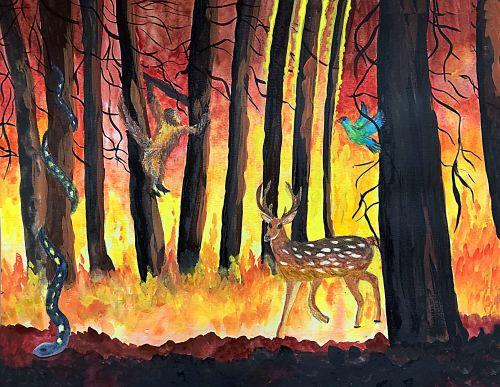 Daniel Organ, 14 years old, USA, El Nino Fire in Amazon