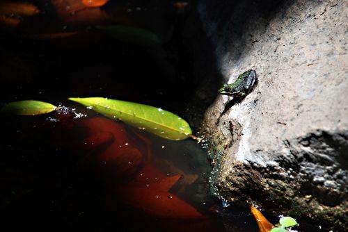 Ewelina Zjezdzalka, Canary Islands frog