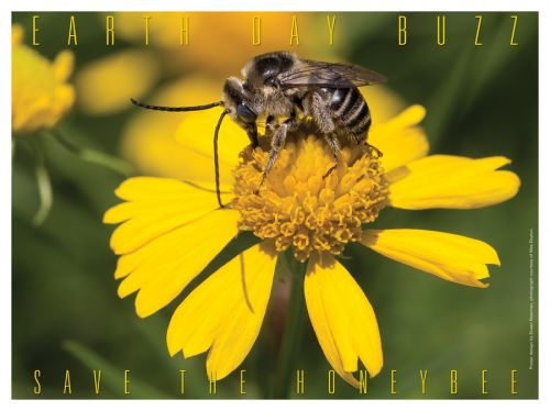 Earth Day Buzz - Save the Honeybee