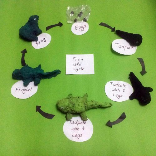 1-Frog Life Cycle, Siah Pei Shan, 6 years old and Ooi Ling Ling, 40 years old from Malaysia.
